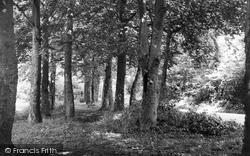 Aylesham, Spinney Lane c.1955