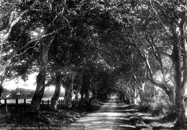 Ayr, Longhill Avenue 1900
