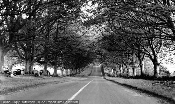 Photo of Badbury Rings, The Avenue c.1955