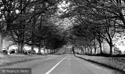 The Avenue c.1955, Badbury Rings