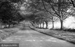 The Avenue c.1960, Badbury Rings