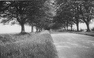 Badbury Rings, The Avenue c.1960