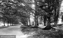 The Avenue Of Trees 1936, Badbury Rings