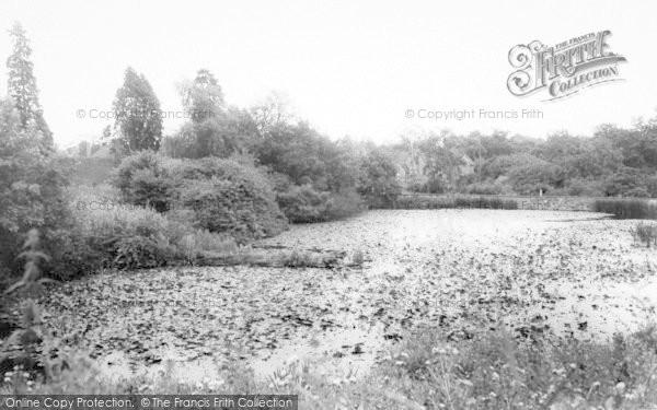 Photo of Badger, Pond c.1965