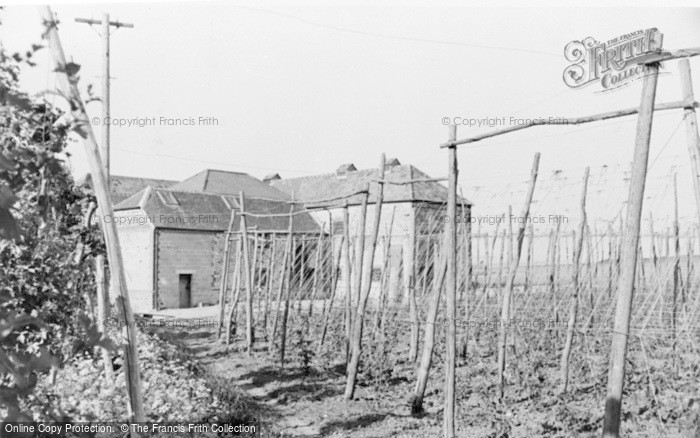 Photo of Badshot Lea, Hop Fields c.1955