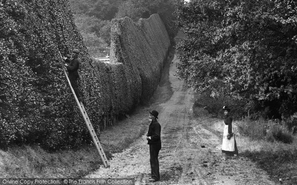 Photo of Bagshot, Cutting The Hedge 1906