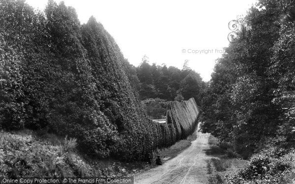 Photo of Bagshot, Holly Hedge, Pennyhill Park 1901