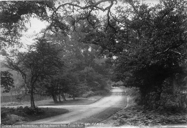Photo of Bagshot, Swinley Woods 1901