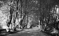 Balcombe, Beeches c.1955