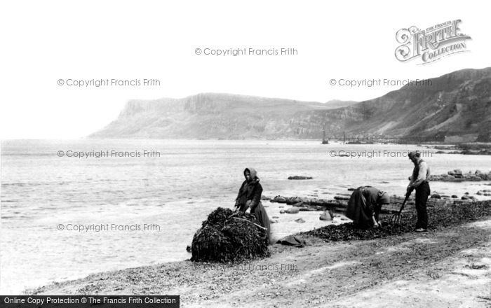 Photo of Ballycastle, Kelp Gatherers At Work Near Fair Head c.1900