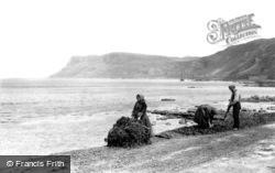 Kelp Gatherers At Work Near Fair Head c.1900, Ballycastle