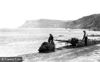Ballycastle, Kelp Gatherers at work near Fair Head c1900