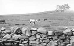 Baltasound, Shetland Ponies c.1960