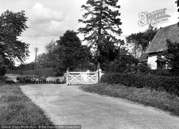 Photo of Barking Tye, Brown's Farm 1934
