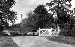 Flock Of Sheep, Brown's Farm 1934, Barking Tye