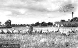 Shepherd 1934, Barking Tye