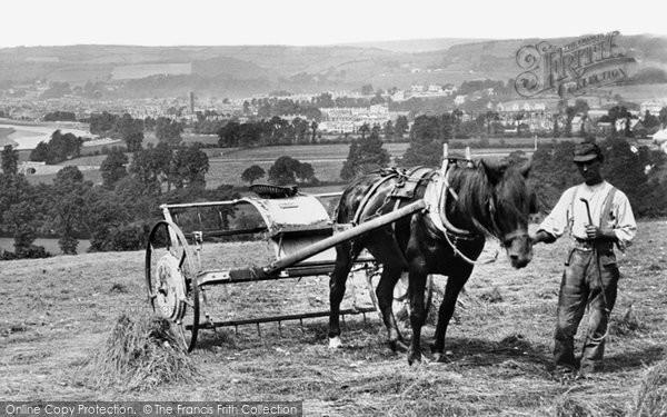 Barnstaple, Haymaking 1890
