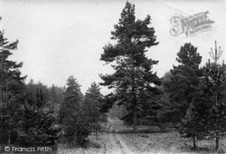 Beacon Hill, The Glen 1911