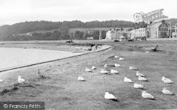 Beaumaris, Seagulls c.1955