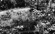 Belbroughton, The Waterfall c.1965