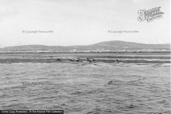 Photo of Berneray, Seals Off The Island 1963