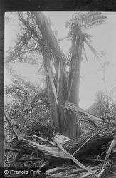 Wonham, The Blasted Tree 1896, Betchworth