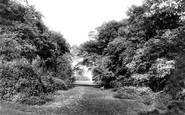 Beverley, Westwood Burton Bushes 1900