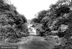 Burton Bushes, Westwood 1900, Beverley