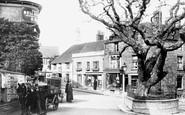 Bexhill, Old Town, Walnut Tree 1897