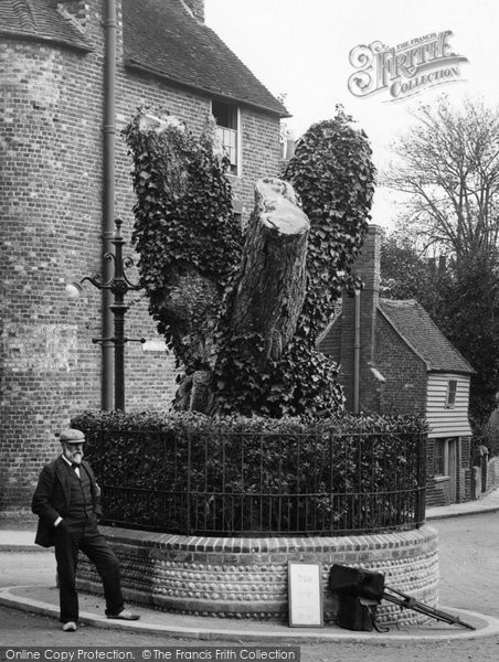 Bexhill, The Old Walnut Tree 1903