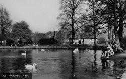 The Swans In Danson Park c.1955, Bexleyheath