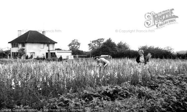 Beyton, Jeavons Nurseries c1955