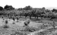 Bidborough, An Orchard c.1960
