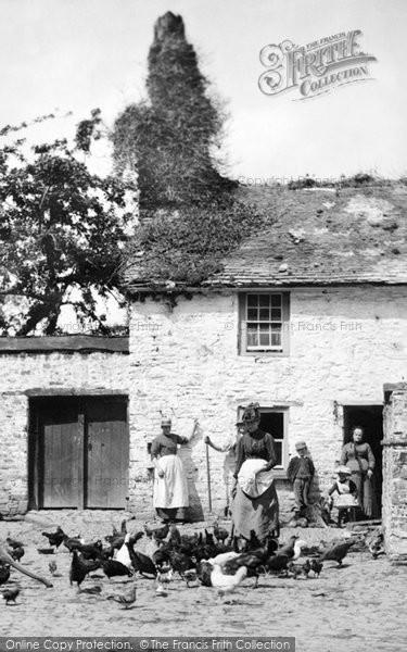 Photo of Bideford, Poultry, Old Ford Farm Yard 1890