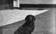 Bigbury-on-Sea, 'ruin' The Pet At  Burgh Island Hotel c.1933