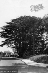 Biggin Hill, The Old Cedar Tree c.1960