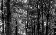 Blackburn, The Park, Lovers' Walk 1894
