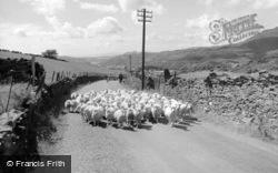Blaenau Ffestiniog, Sheep On A Country Road 1961