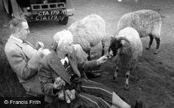 Moor, A Couple Feeding Sheep c.1952, Blubberhouses