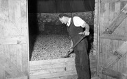 Bodiam, Hop Drying c.1955