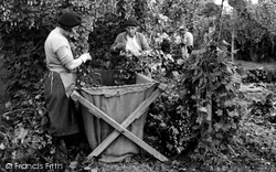 Hop Picking c.1955, Bodiam