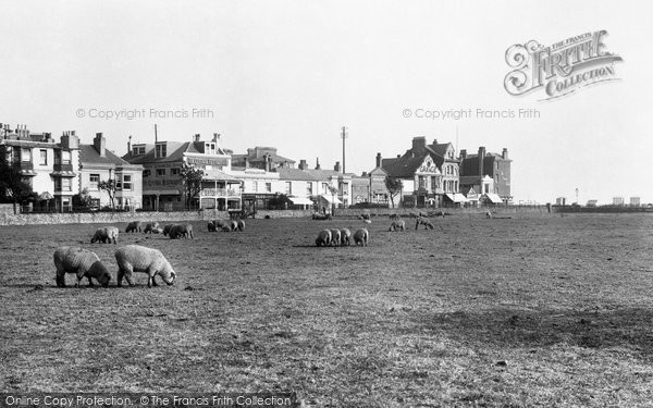 Bognor Regis, Waterloo Square, Sheep Grazing 1921