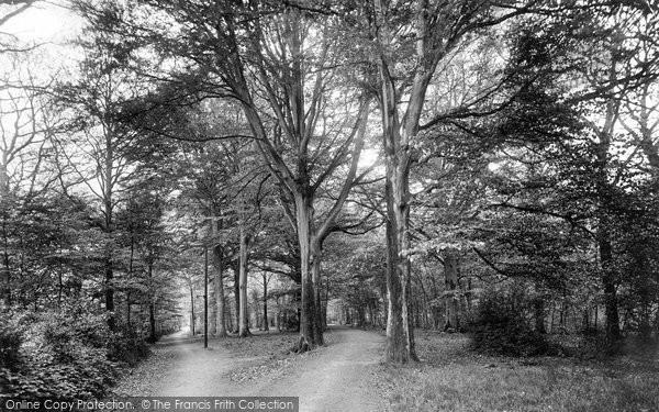 Bordon, The Wood 1919