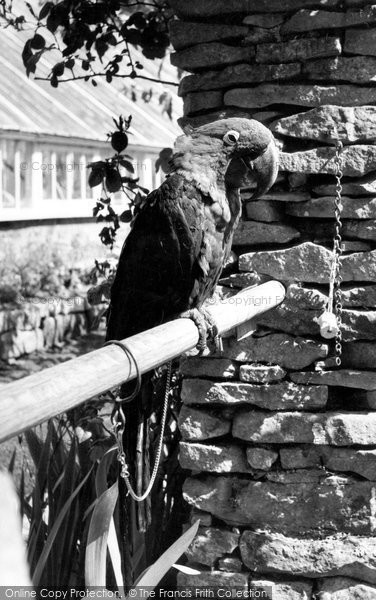 Bourton On The Water, Parrot, Cotswold Botanical Gardens c.1965