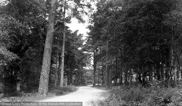Bovington, The Woods, Menin Road c.1955