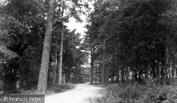 Bovington, The Woods, Menin Road c.1955, Bovington Camp