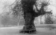 Bowdon, Dunham Park 1897