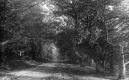 Box Hill, The Avenue 1906