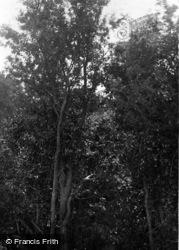 Bramber, Castle 1890