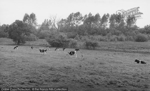 Bramerton, The Common c.1955